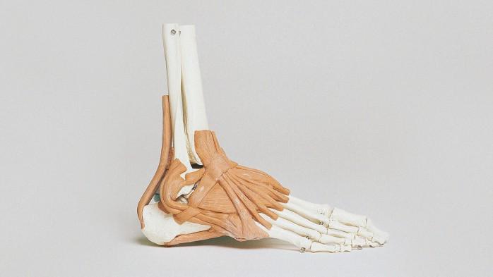 anatomia dos pés